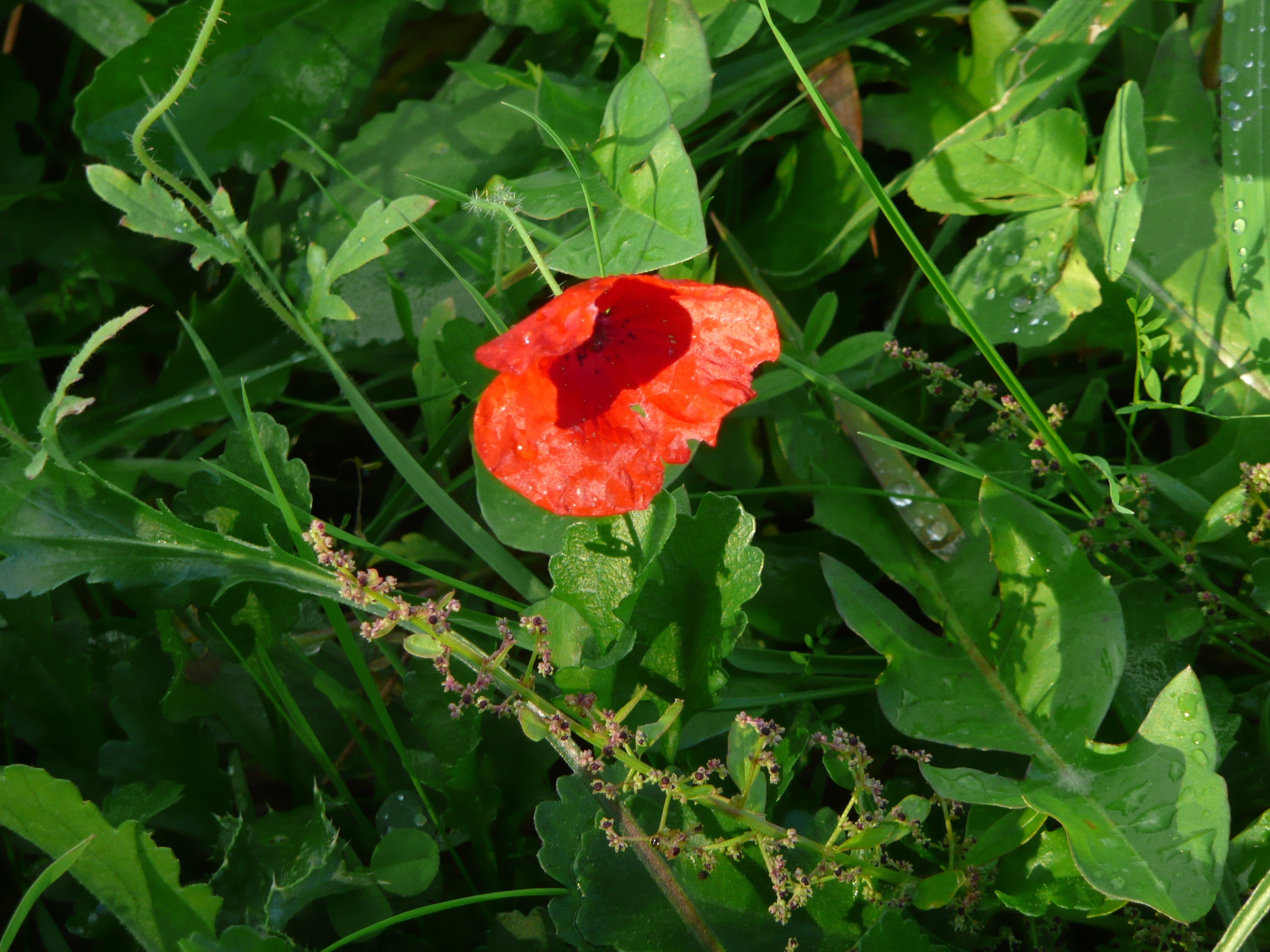 REMEMBRANCE - Image 1